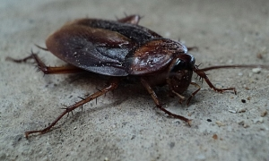 cockroach control san francisco california